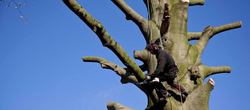 Rooien van een boom